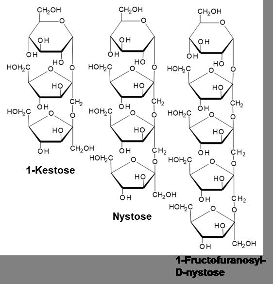 は フラクトオリゴ 糖 と オリゴ糖の種類の基礎的知識