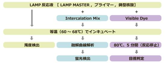 検査 Lamp 法